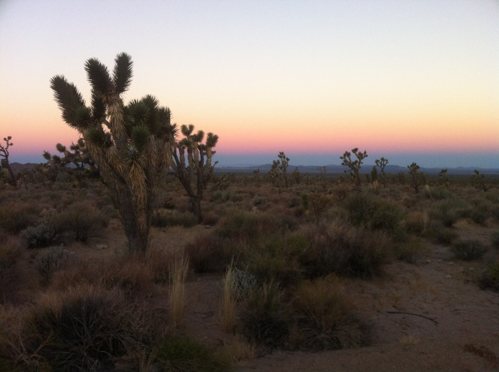 My first morning in the Mojave Desert